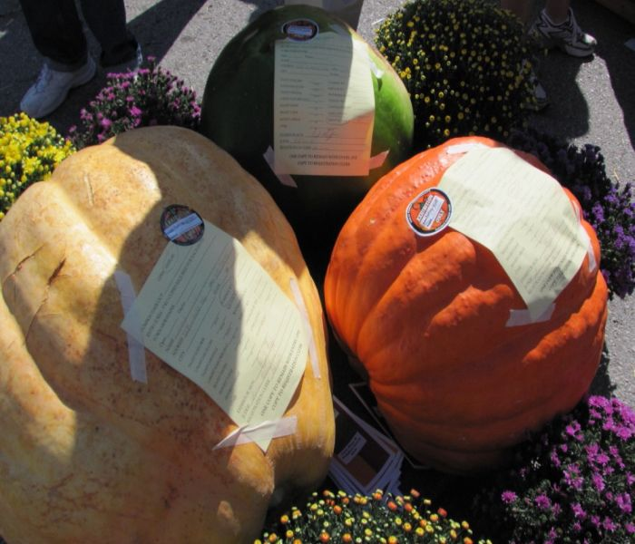 pumpkin grouping-1.jpg