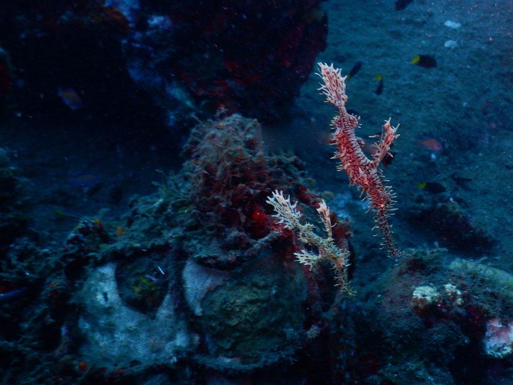 Flores, Akermi Dive resort (15).jpg
