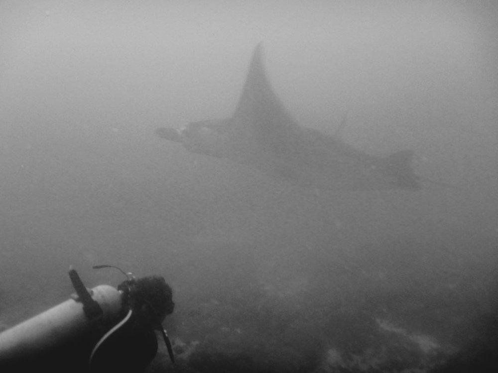 Komodo Diving Day 1 (3).jpg