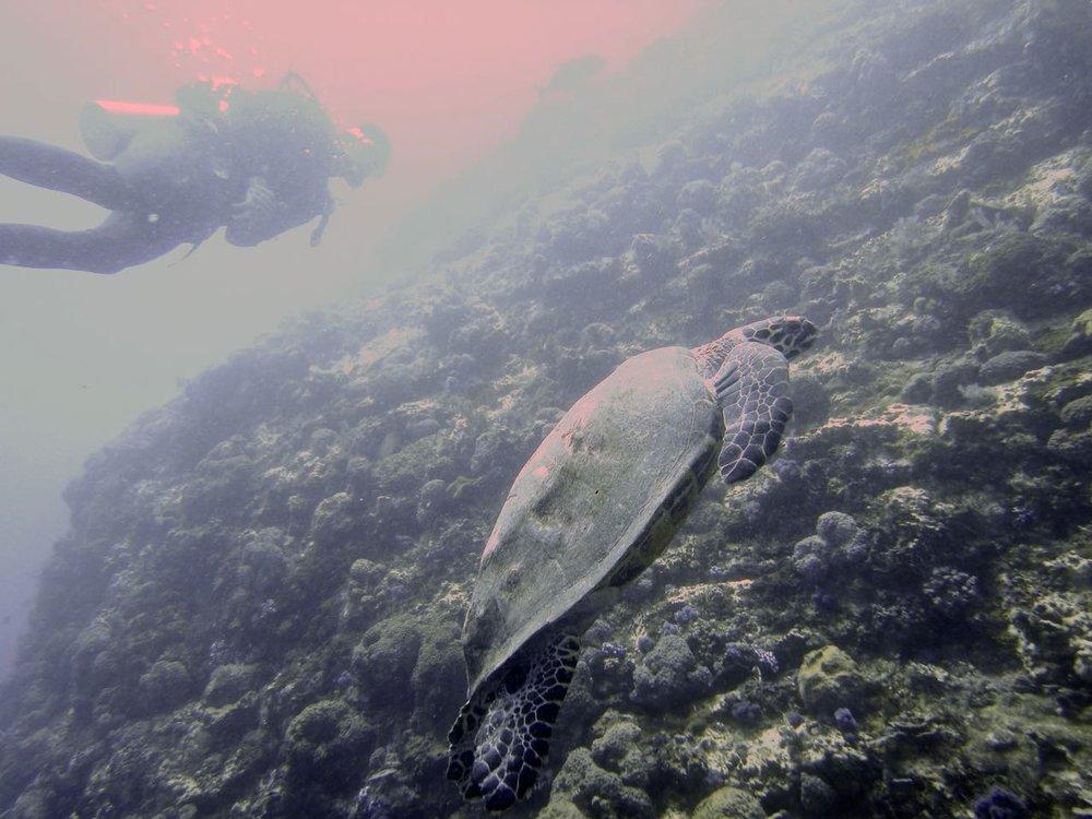 Komodo Diving Day 1 (6).jpg