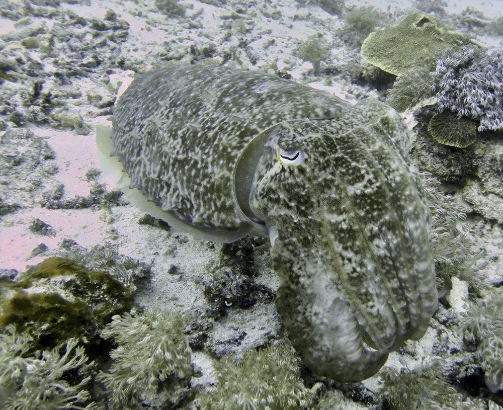 Komodo Diving Day 1 (12).jpg