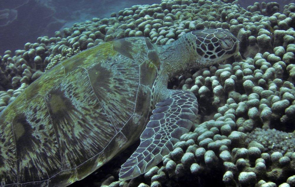Komodo Diving Day 1 (15).jpg