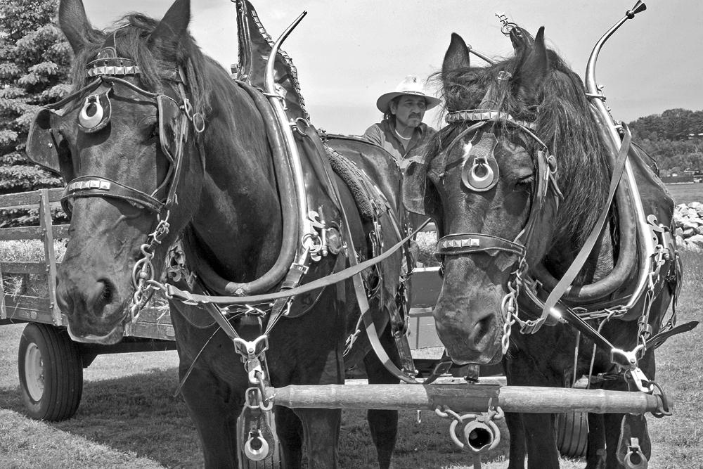 elberta sol horses(blackandwhite-rbb.jpg