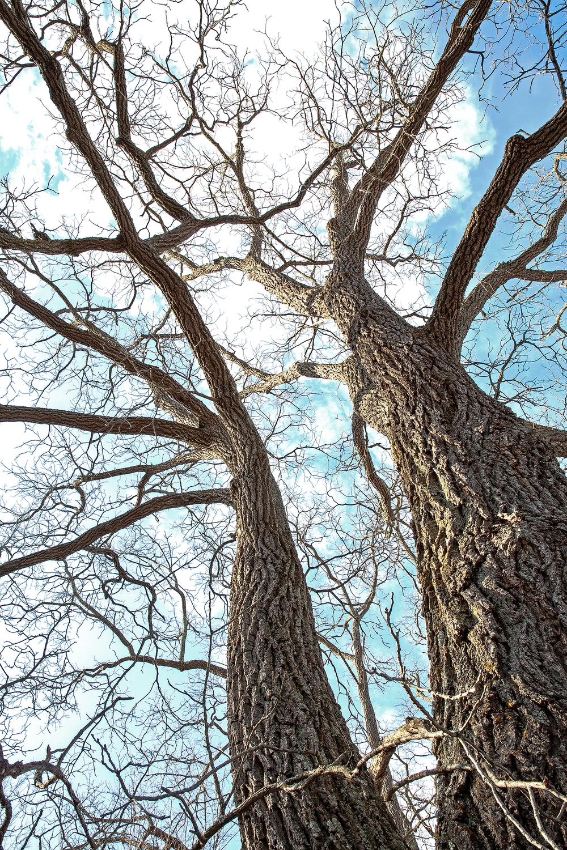 tree sky blue.jpg