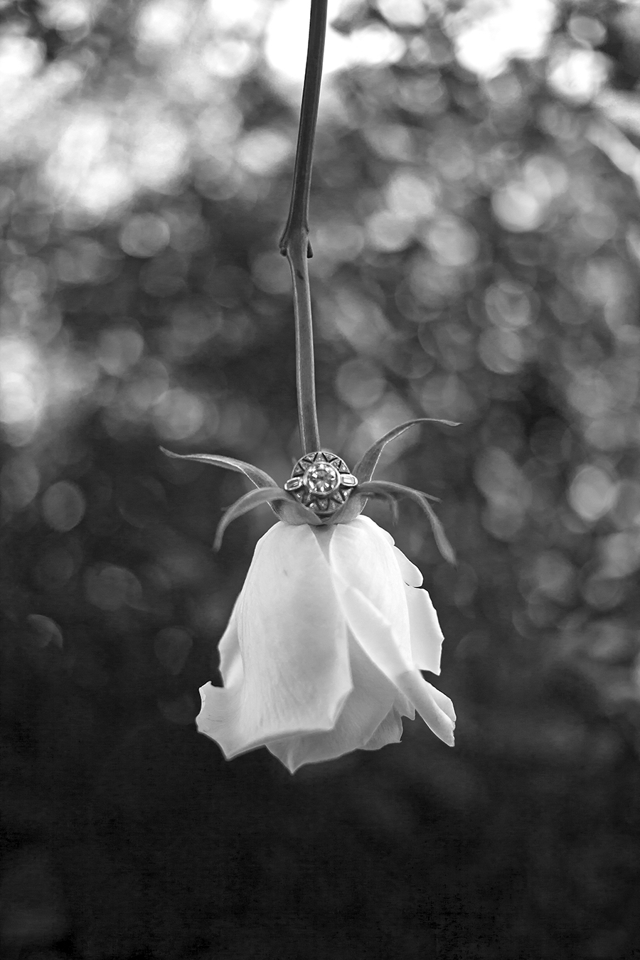 rose ring(WEB)(B&W).jpg