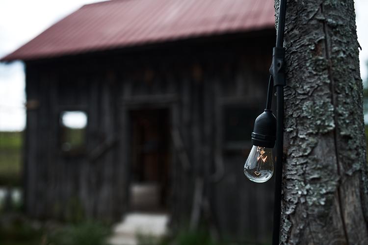 bulb & shed(WEB).jpg