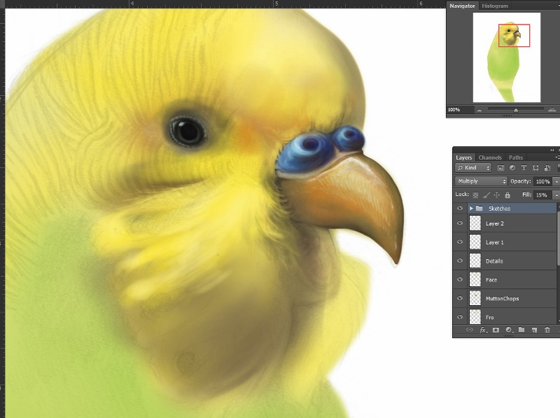 Budgerigar Project made using Photoshop CS6.