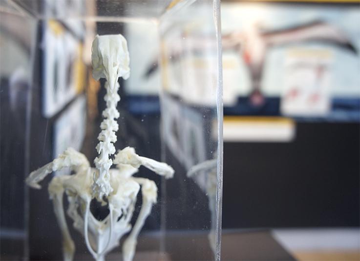 BirdSkeleton.jpg
