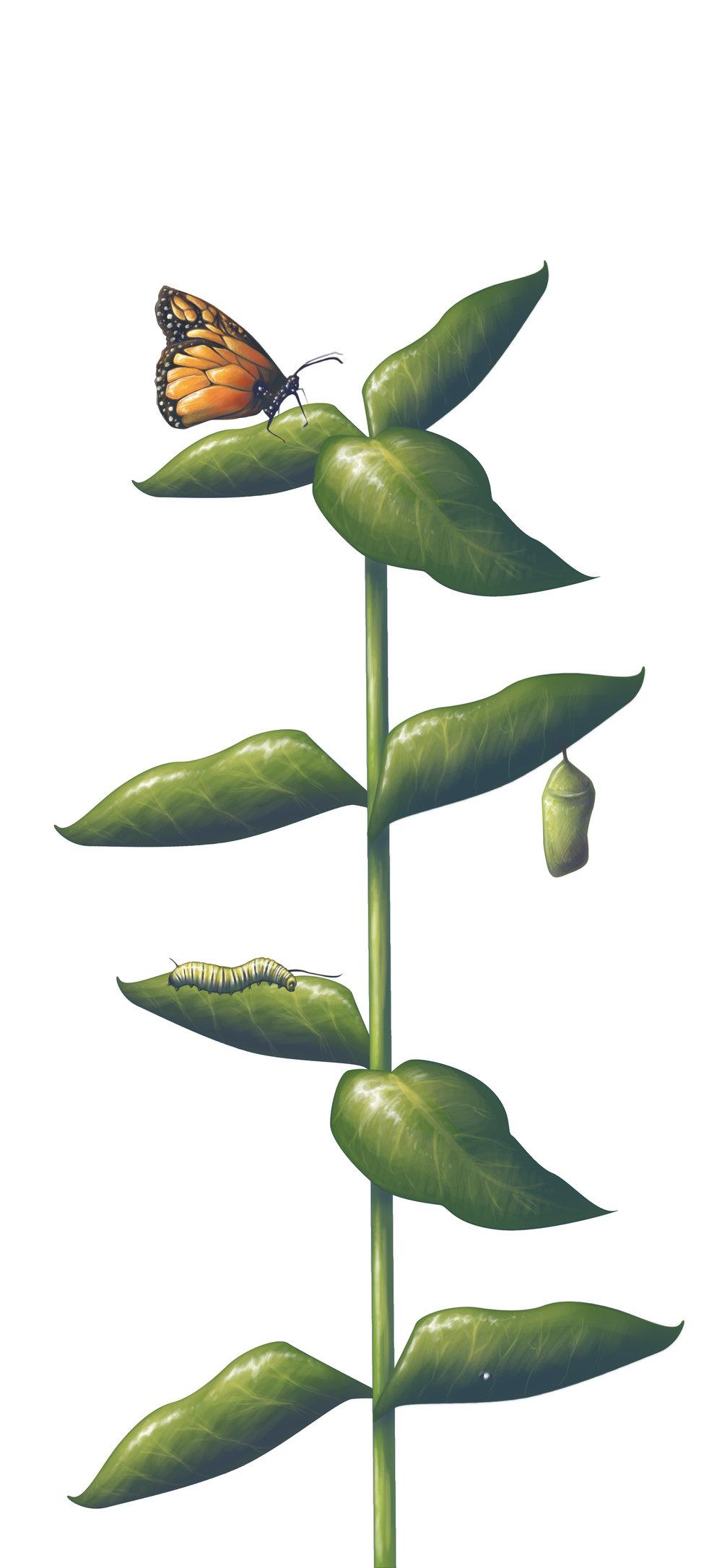 Catterpillar.jpg