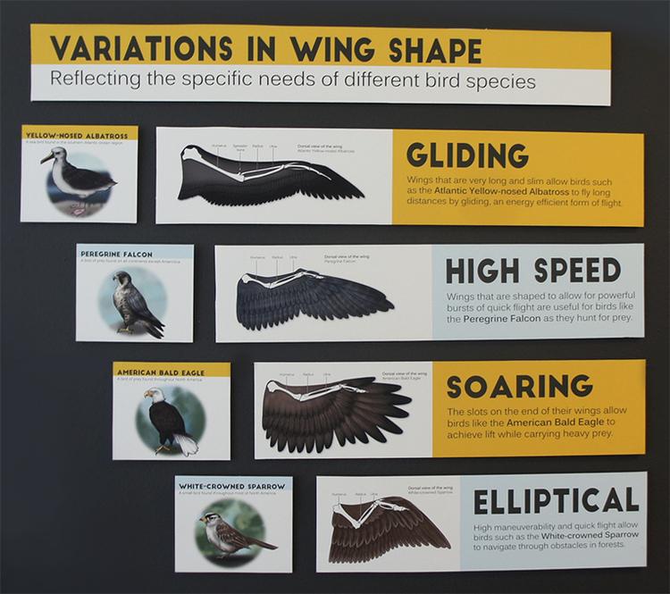 WingShapes.jpg