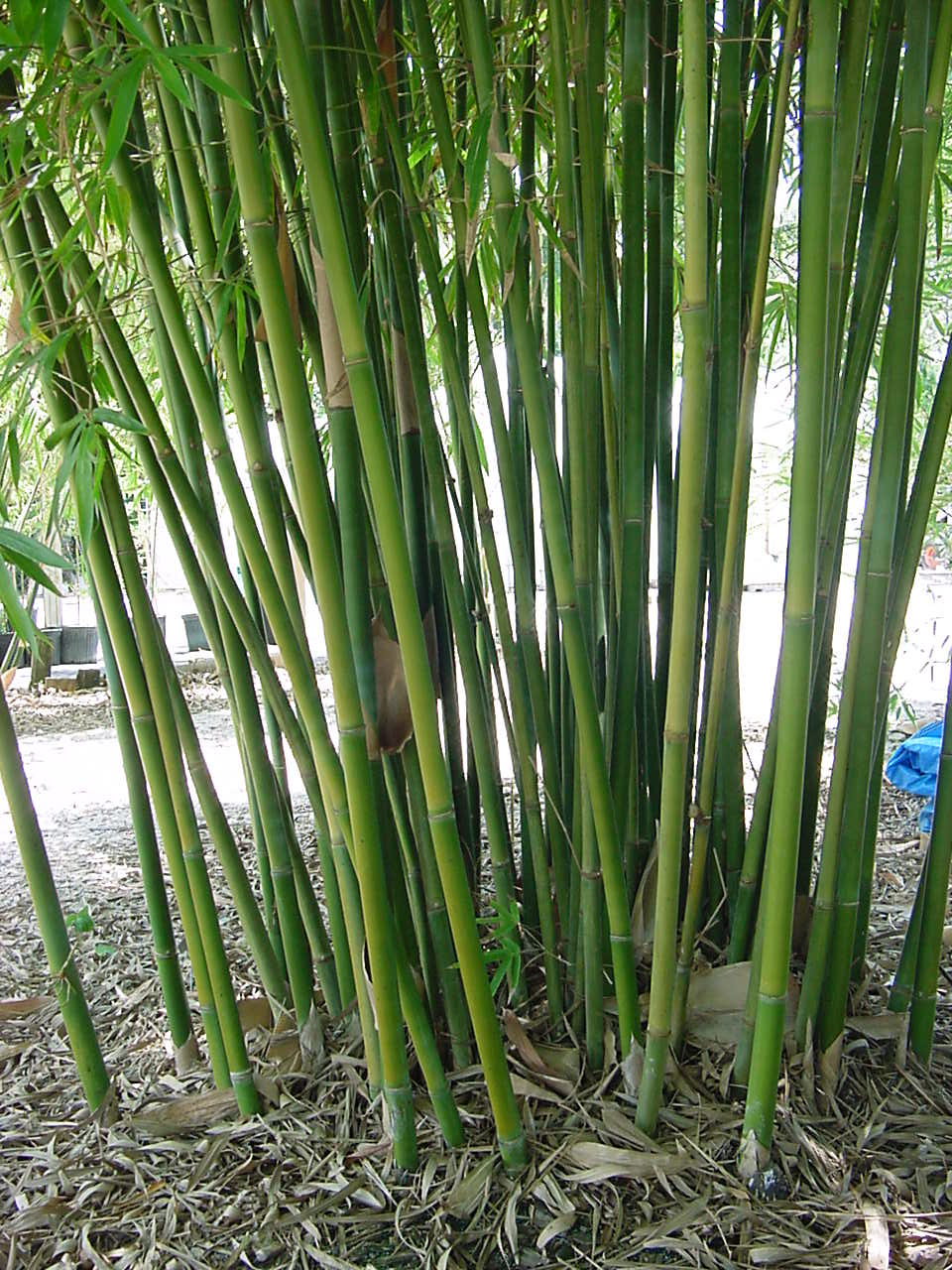 About bamboo — bambootexas