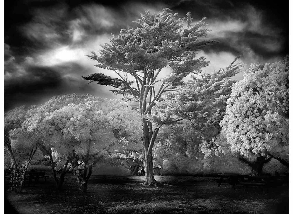Mitch-Dobrowner_Wind-Swept-Tree.jpg