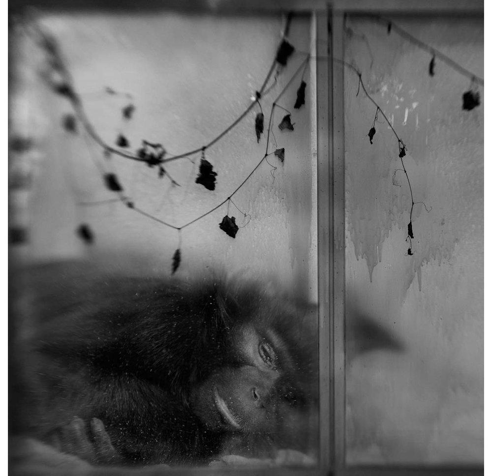 monkey-sleeping-2-copy.jpg