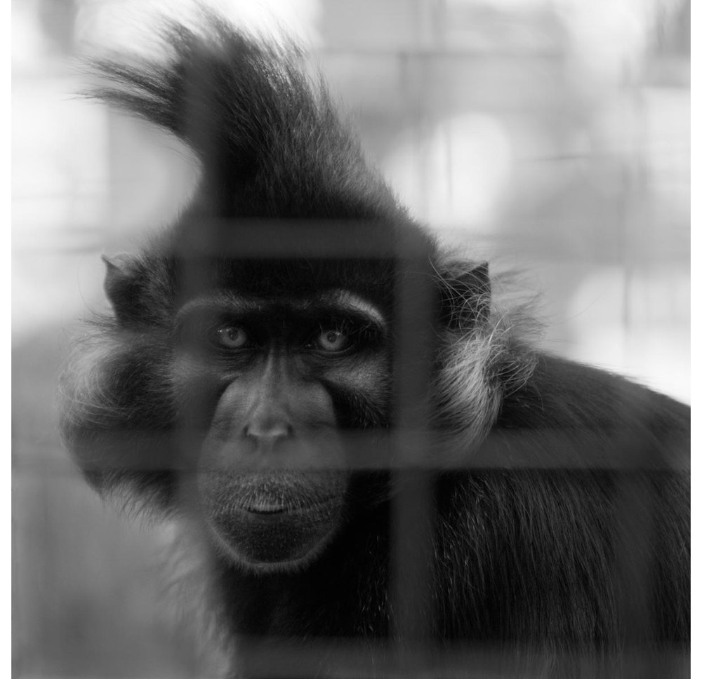 caged-copy.jpg