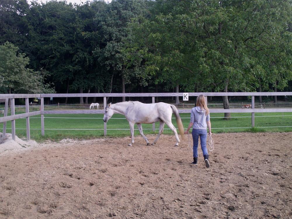 Met non verbale signalen richting aan het paard geven