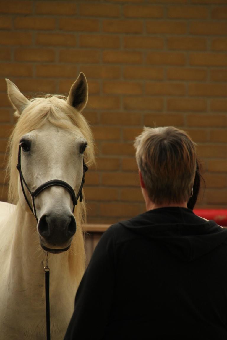 Een paard staat tegenover je en communiceert met de kleinste signalen