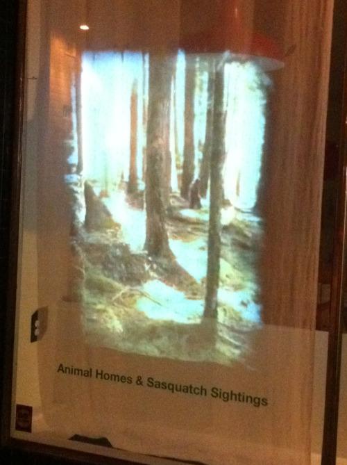 animalhomes2.JPG