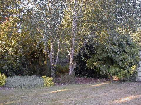 Photinia, Oregon-grape, birches, holly, dogwood (2003)