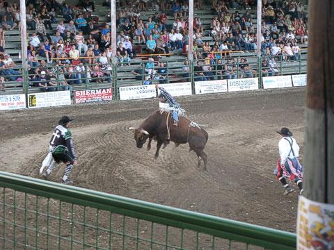 Bull rider at Bull-A-Rama