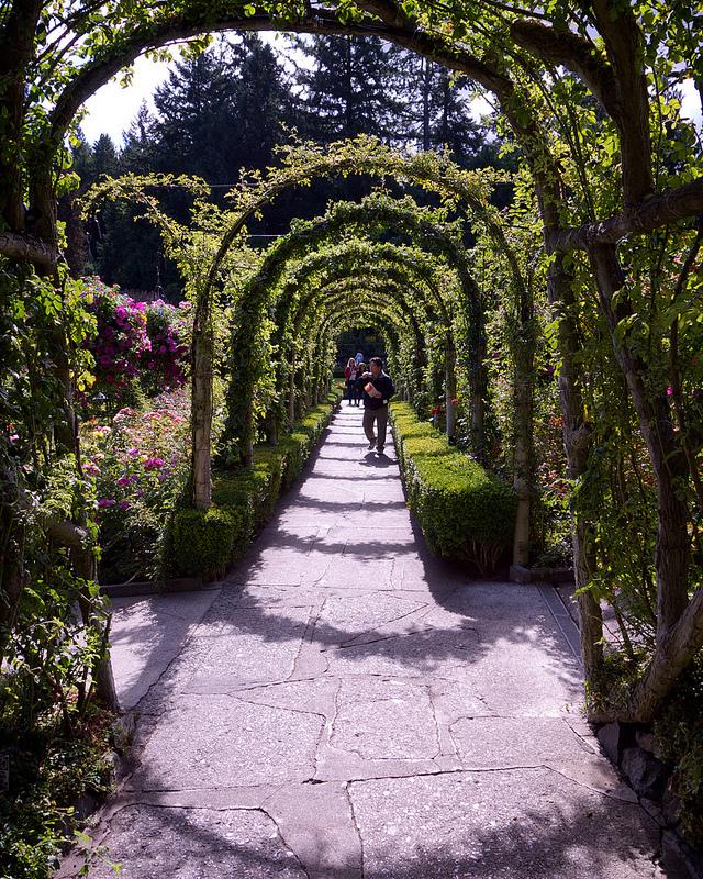 Path through Rose Garden