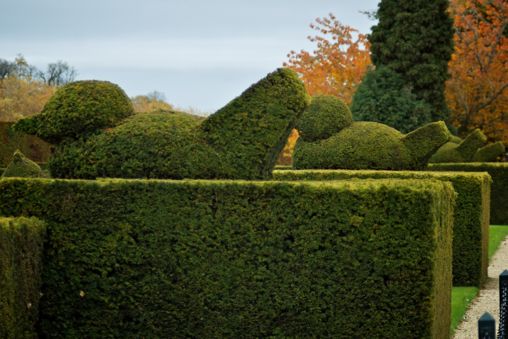 Topiary ducks