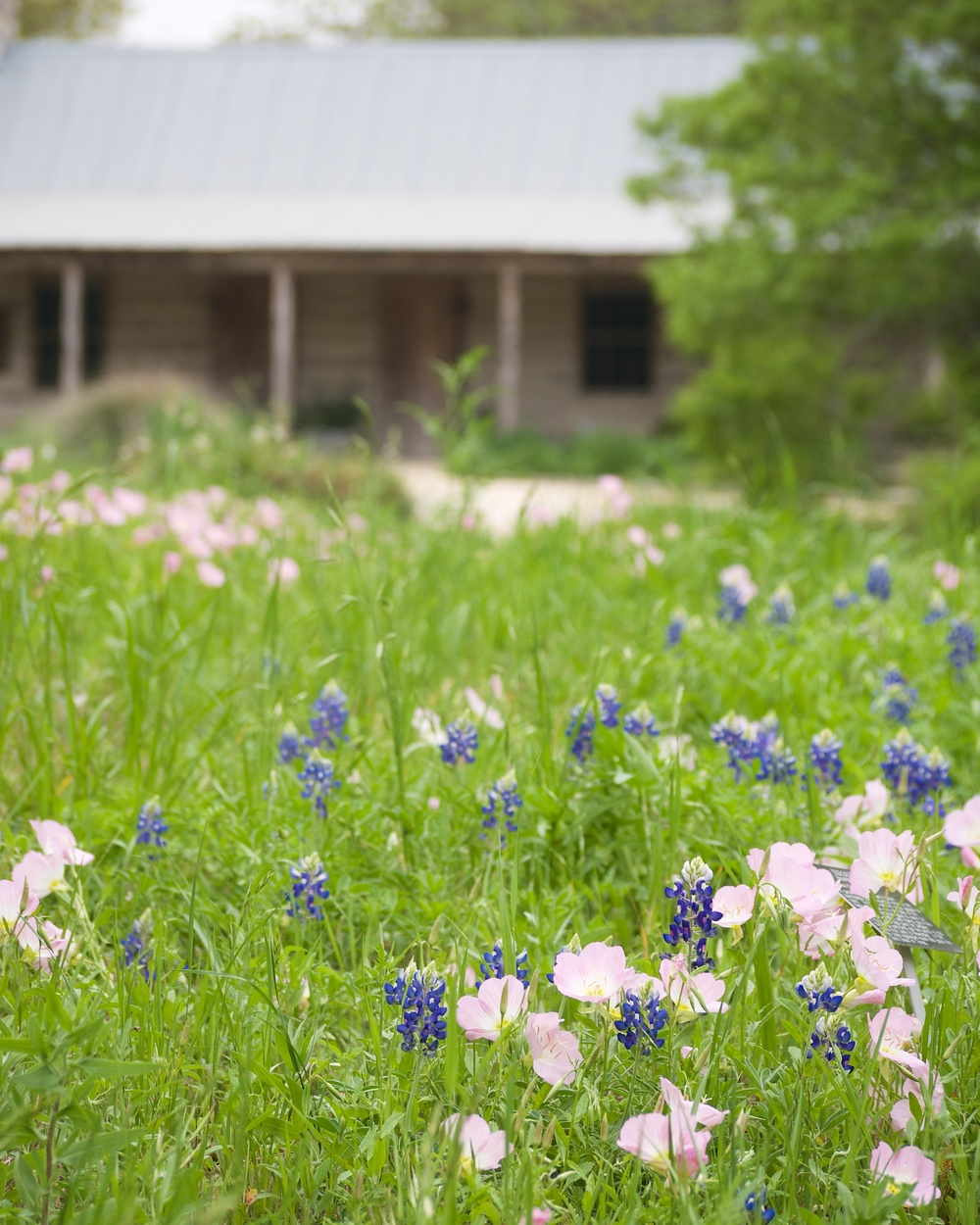 San Antonio Botanical Garden's Hill Country loop