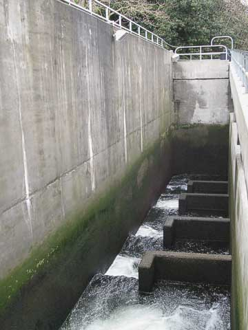 On the far side of the spillway is this fish ladder for spawning salmon.