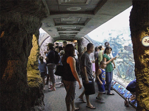 The Tropical Reef Habitat is like walking down a tube surrounded by water.