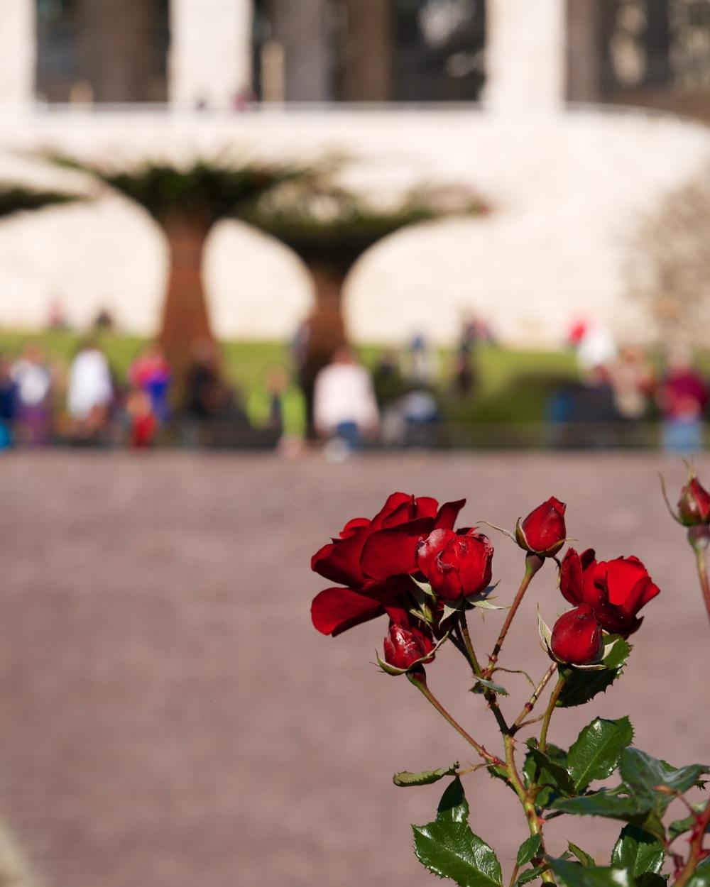 Getty Museum Gardens