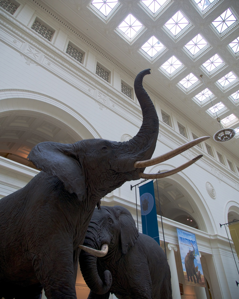Elephants in the main hall