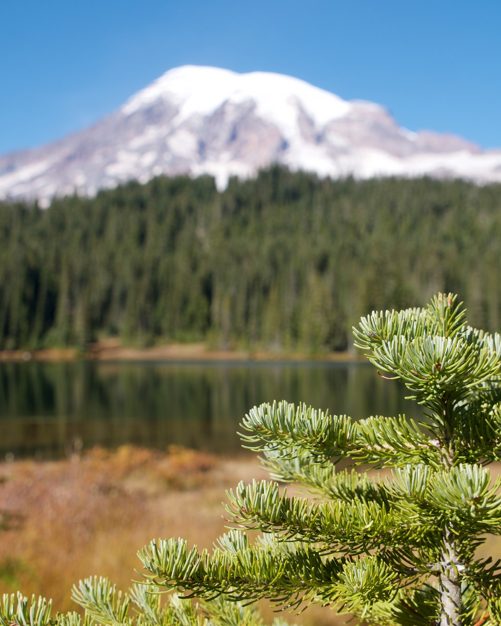 Mt. Rainier and Reflection Lake