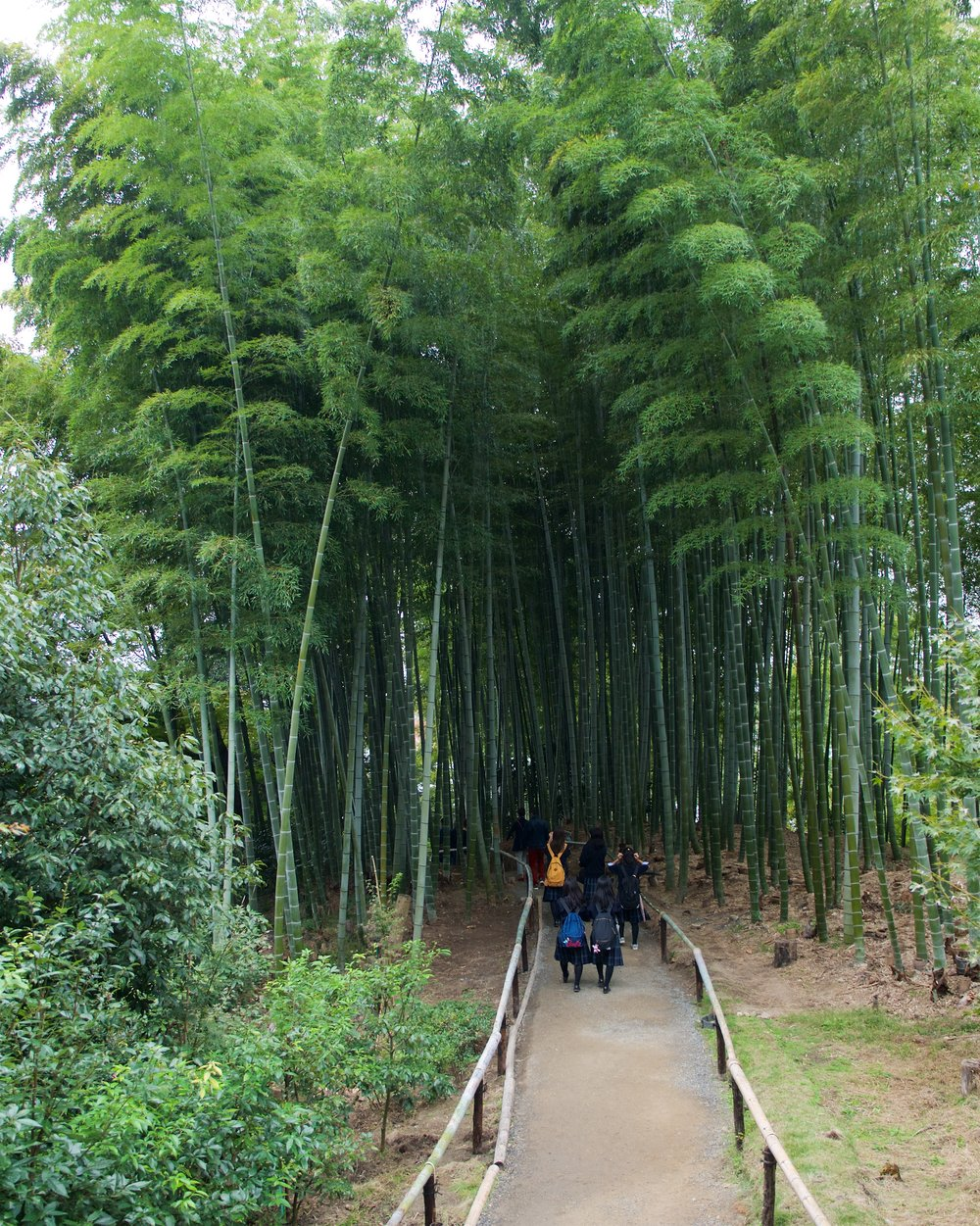 Bamboo forest at Kodaiji Temple