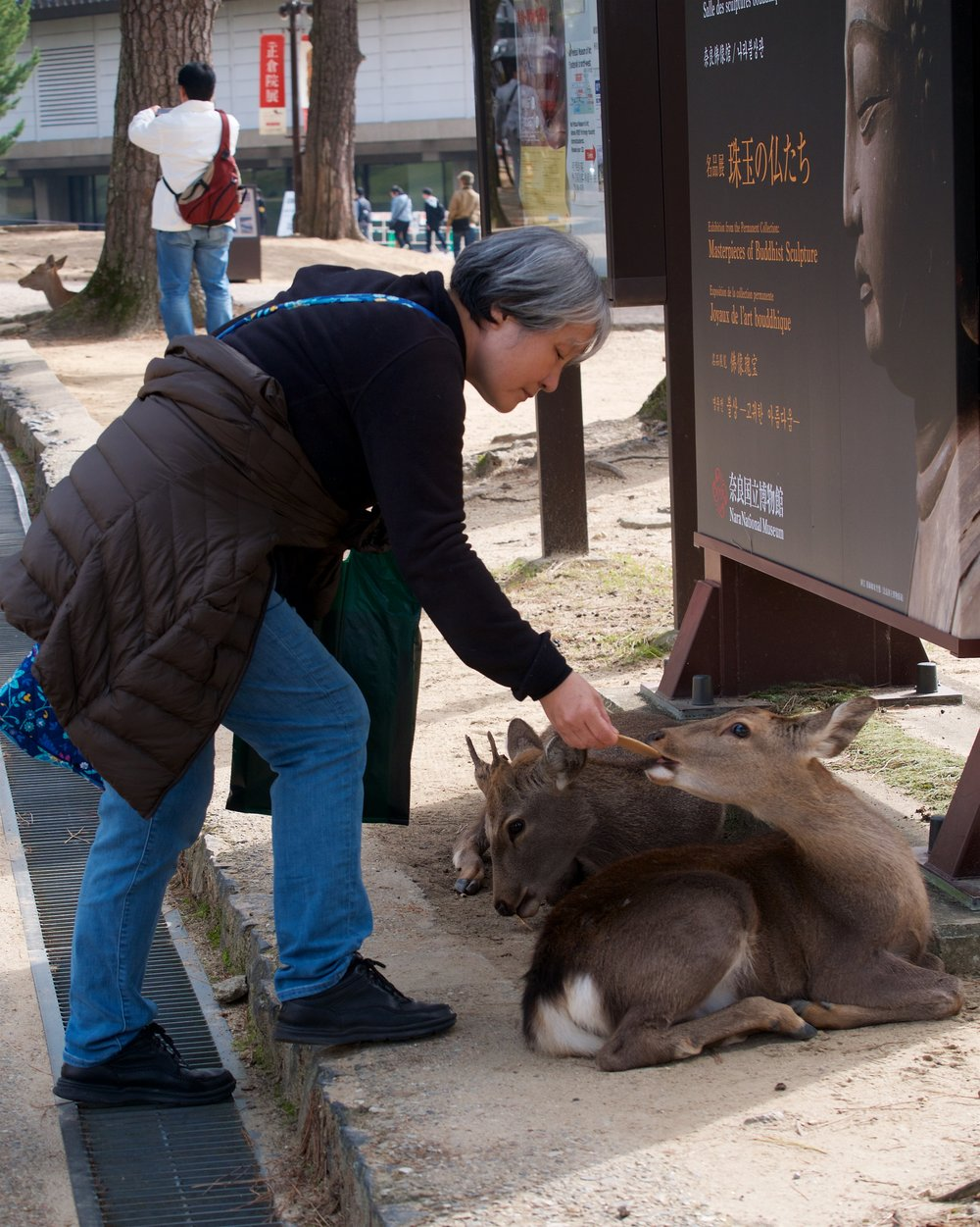 Feeding the deer sika senbei