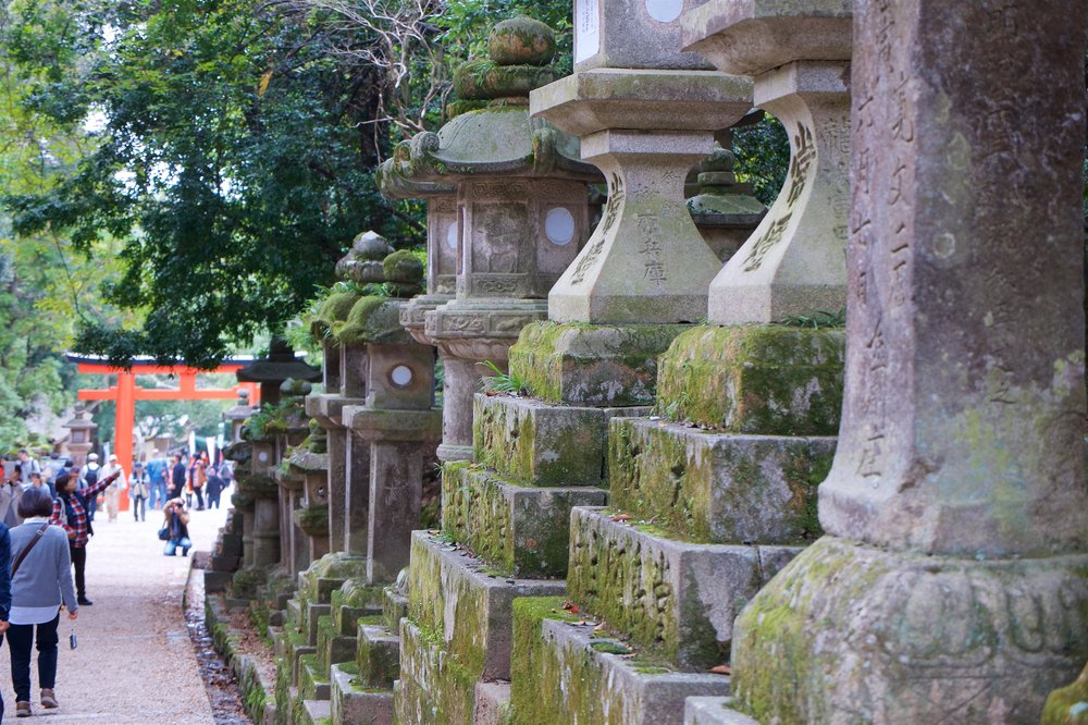 Lanterns lining the entrance path of Kasuga-taisha