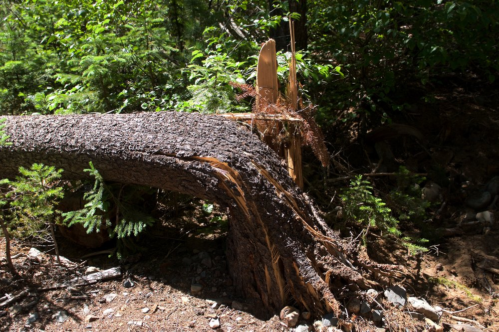 We came across almost three dozen trees fallen across the trail