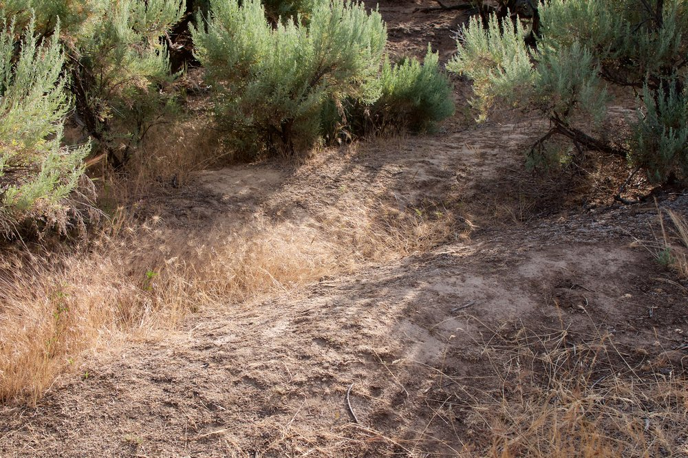 Wagon wheel ruts