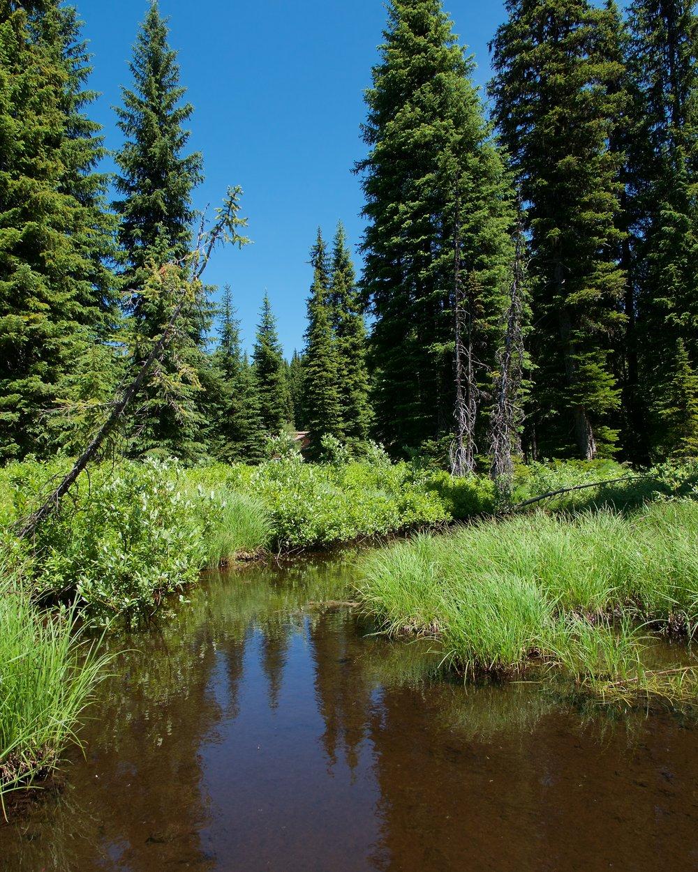 Lolo Pass wetlands walk