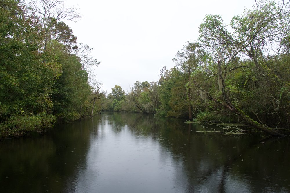 The bayou for our tour