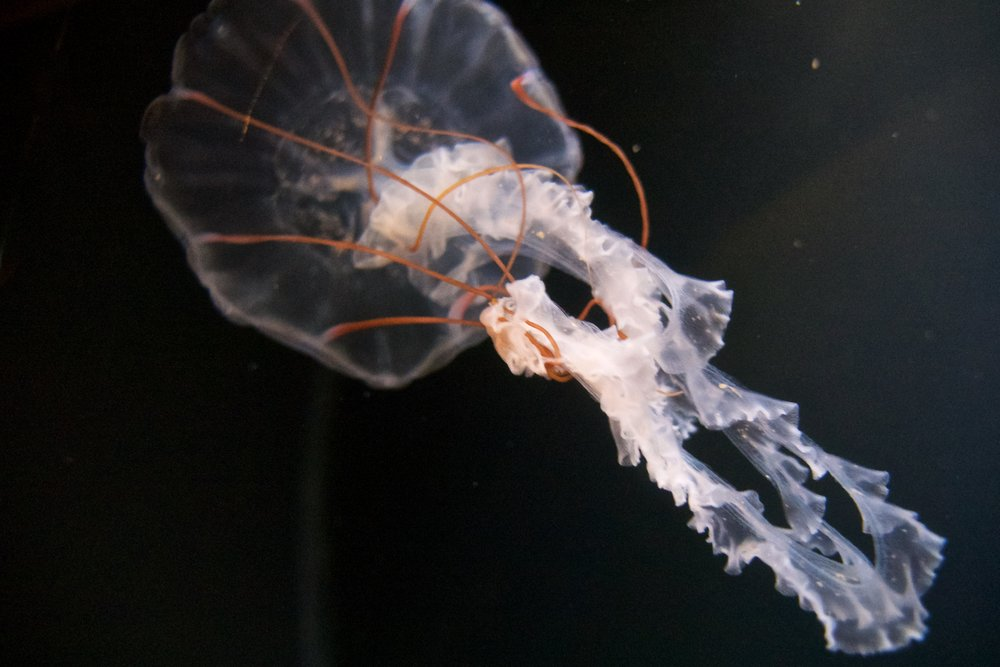 Purple striped jelly