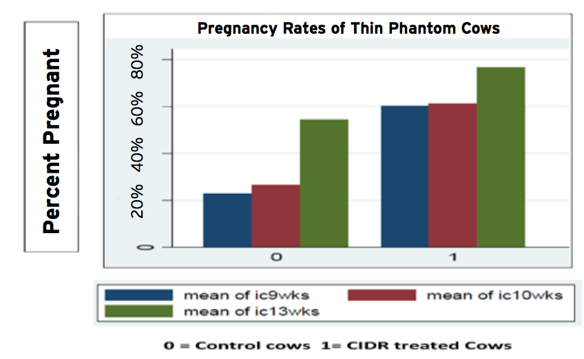 Pregnacy-rates-of-thin-phantom-cows.png