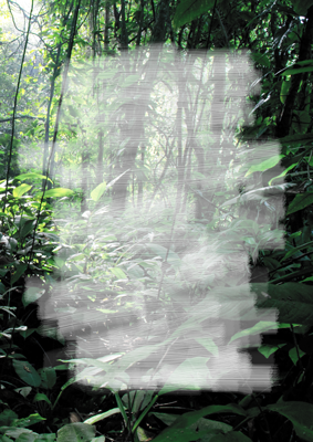 FOREST_2.png