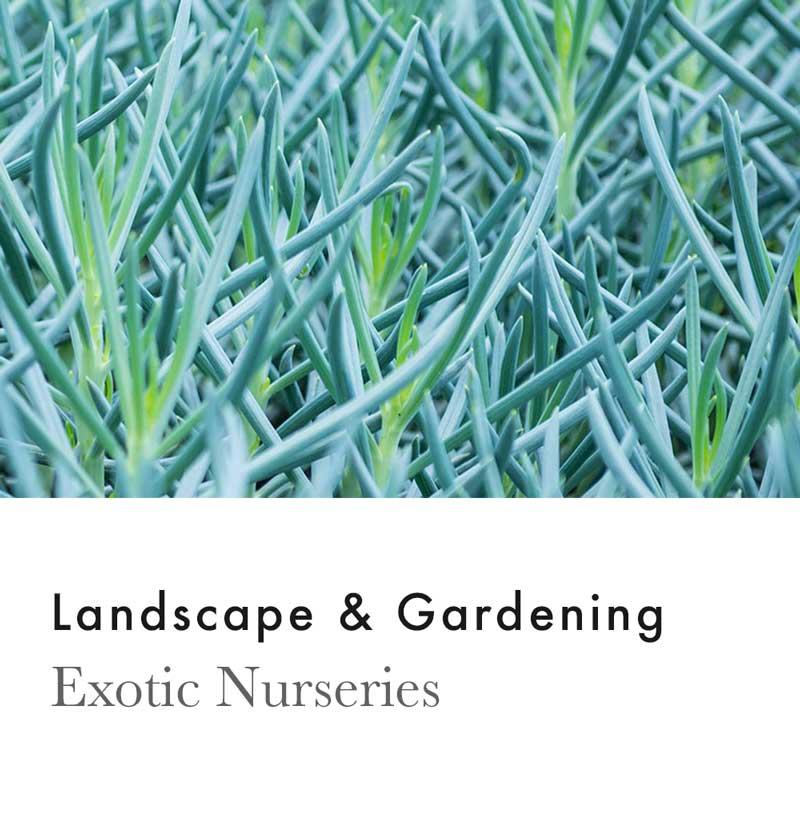 © Chris Rae Design Sydney - Exotic Nurseries - Graphic Web Branding Social Media Marketing.jpg