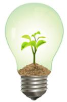 lightbulb seedling