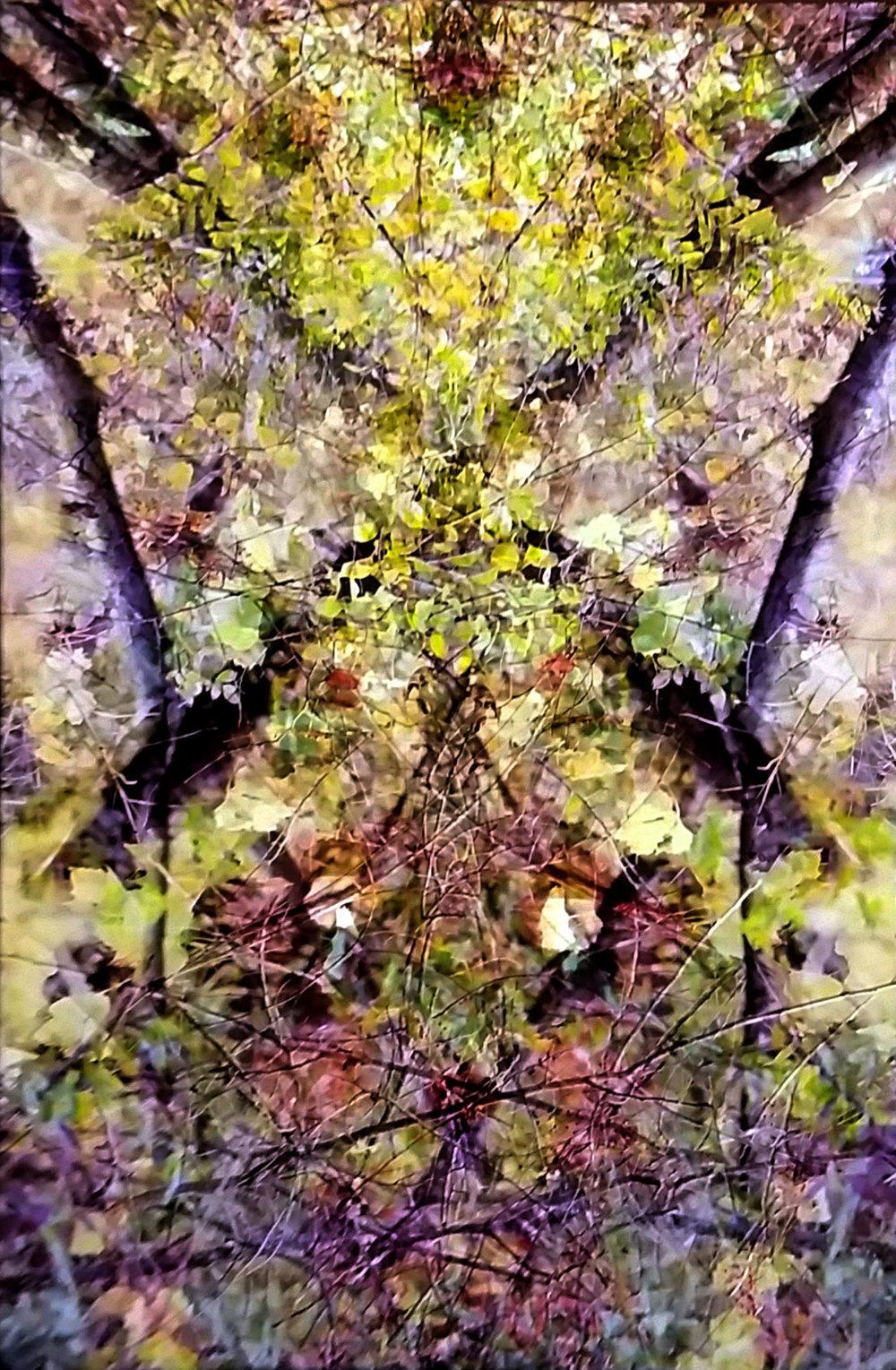 © 2015 Diane Ronayne, Angry Rabbit