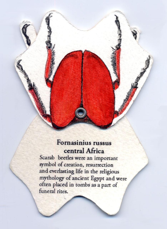 © 2009 Libby Barrett, Coleoptera