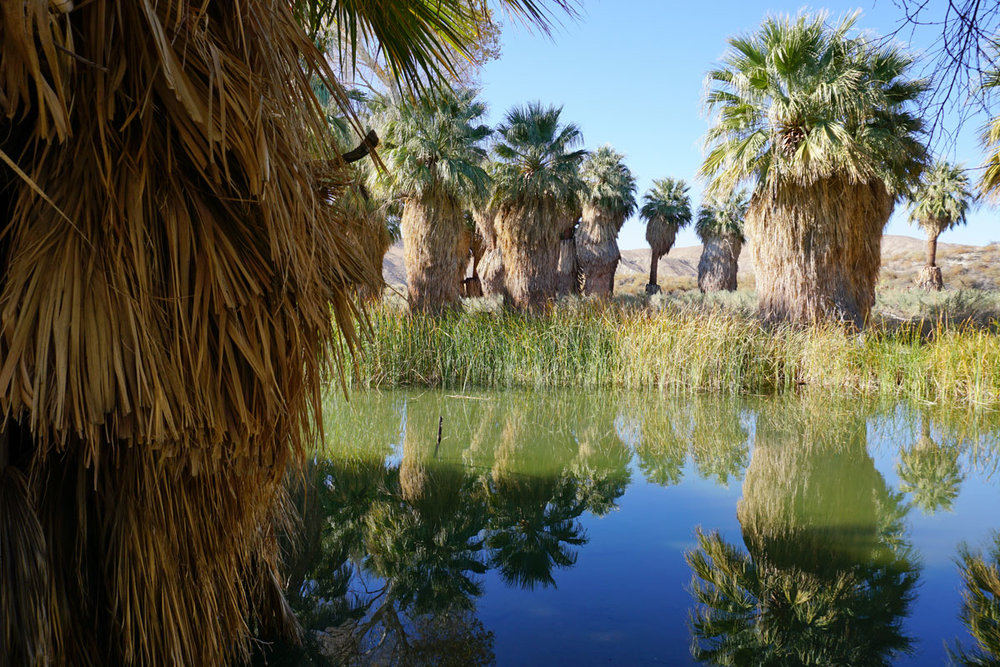 © 2017 Louise Levergneux, Coachella Valley Preserve - Thousand Palms Oasis Preserve in Riverside County, California
