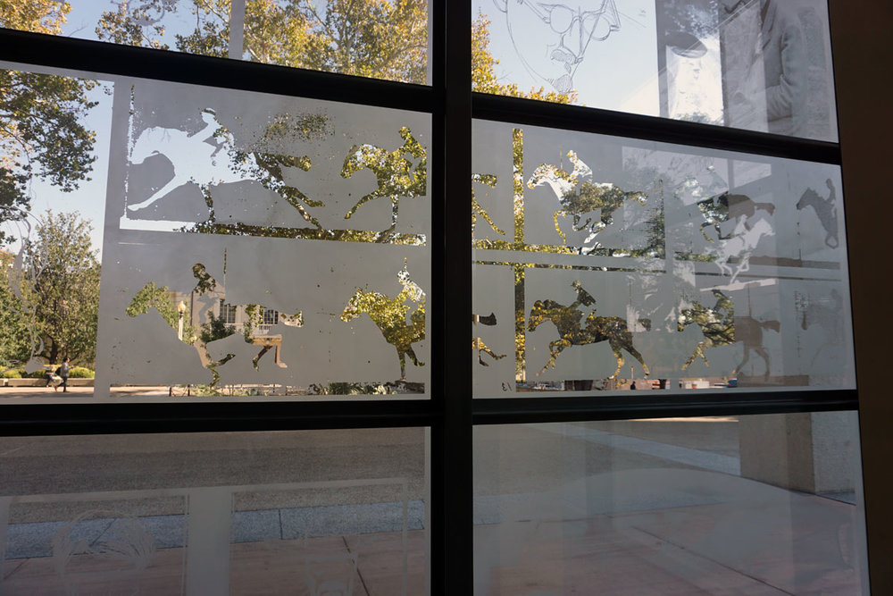 © 2017 Louise Levergneux, right plaza etched glass of the Harry Ransom Center, Austin, Horse in Motion, Eadweard Muybridge, ca 1886