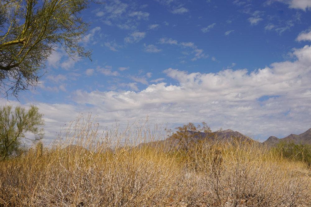 001FLW01 Taliensen-West,-Phoenix,-AZDSC01340.jpg