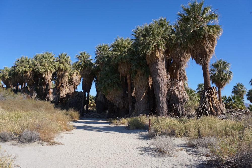 © 2017 Louise Levergneux. Coachella Valley Preserve Thousand Palms Oasis, California, beautiful sand and one rock! /  Oasis des mille palmiers dans la réserve de la vallée de Coachella, Californie, beau sable et une roche !