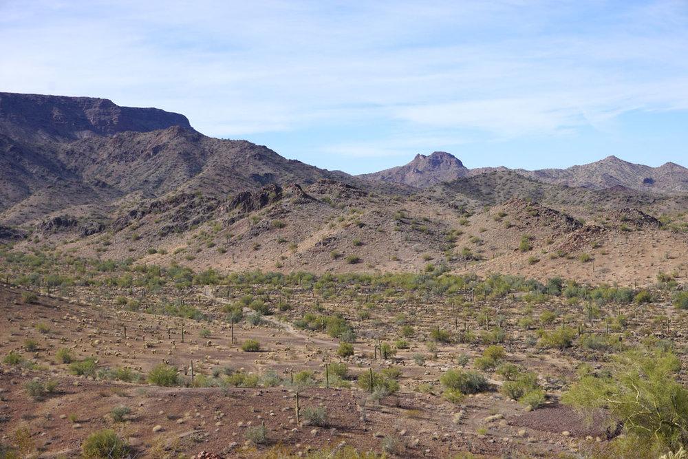© 2018 Louise Levergneux. Sonoran Desert. /  Le Désert de Sonora